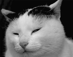 don corleone (PILANA) Tags: bw cats look animal cat olympus olympusc5060 animalplanet c5060 doncorleone pilana bestofcats renatomajeti olympusc5060widezoom