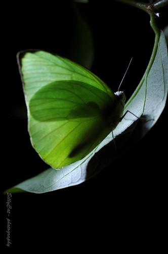 遷粉蝶-21062010