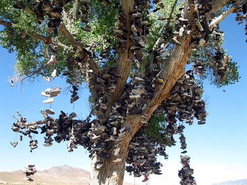 Tree Shoes Nevada Nevada Shoe Tree Was Cut