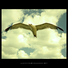 Free (m@®©ãǿ►ðȅtǭǹȁðǿr◄©) Tags: free animals gaviota gaivota seagull sea sky cielo imagenesdefrancia fotosdefrancia saintesmariesdelamer camargue france canon canoneos400ddigital tamron tamron18200mmf3563diiixr m®©ãǿ►ðȅtǭǹȁðǿr◄© marcophotography©