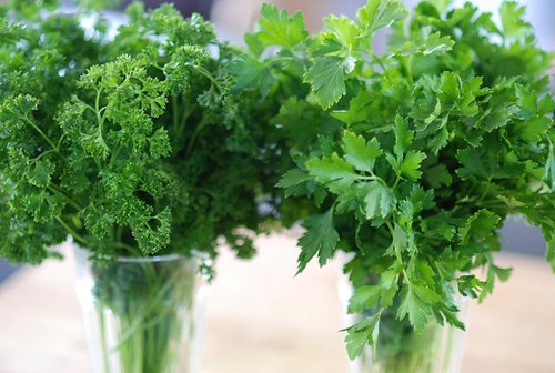 relationship between celery and parsley