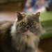 Evil Ugly Cat