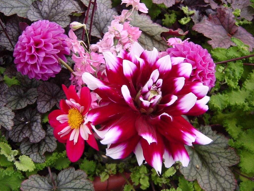 Bouquet - Red-Purple