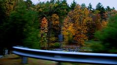 Drive-By 4 (Rupert Pumpkin) Tags: county autumn abstract motion blur tree folkart fallcolors driveby impressionism steven pike polatnick rupertpumpkin stevepolatnick