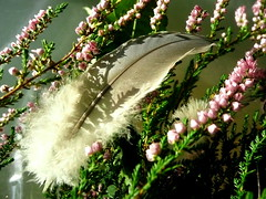 Plume, feuillette et fleurs