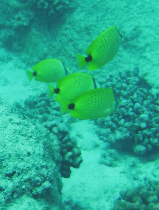 scuba diving oahu 161