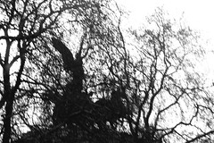 I Turned To Look But It Was Gone... (Lady Vervaine) Tags: uk trees england bw sculpture white black tree london childhood statue wonder photography blackwhite wings child time britain memories wing dream pinkfloyd gone nostalgia vision photograph memory warrior glimpse winged fleeting guesswherelondon londonguessed hydeparkcorner transcendence transcendent gwl comfortablynumb victorymonument