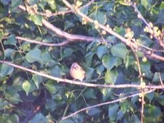 100_1622 (RobMcC) Tags: gardenbird