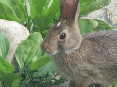 Bunny visit