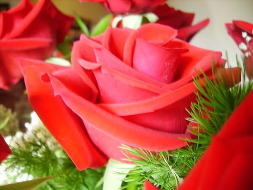 Anniversary Flowers 012