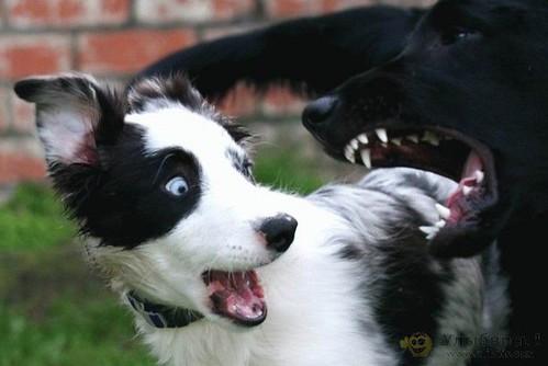 782176326 64a8557637 Funniest Animals
