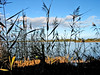 Cherry Lake 047