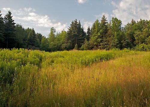 Adil's Meadow in Morning Light