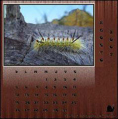 August  Zoo  Calendar