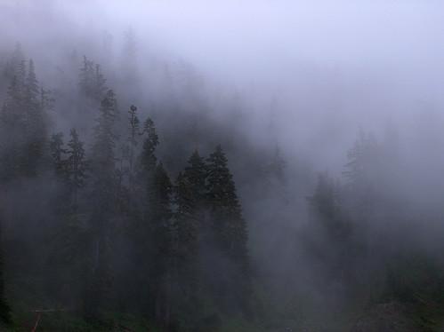 43-Trees Fog