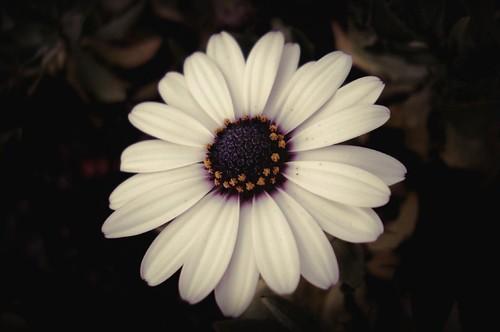 Flor en Septiembre.