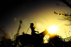 047 (Michael C Strack) Tags: light horse silhouette evening