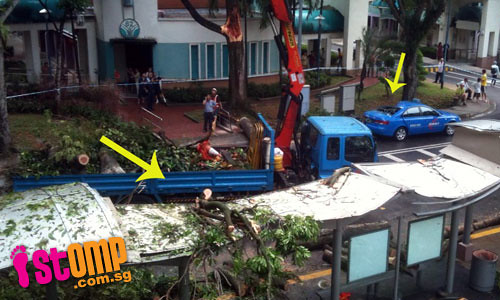 Another fallen tree halts traffic crushing a taxi along with