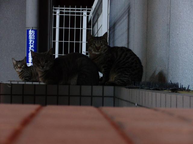 Today's Cat@2010-11-05