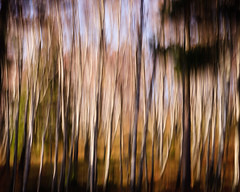 """Streaky Trees II • <a style=""""font-size:0.8em;"""" href=""""http://www.flickr.com/photos/26440756@N06/5156065208/"""" target=""""_blank"""">View on Flickr</a>"""