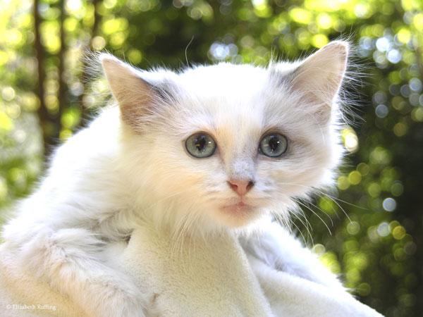 Josephine kitten