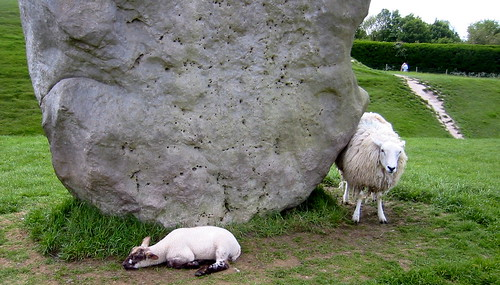 Avebury Stones and Sheep