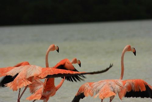 Flying Away Flamingos