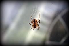 Hrlfur Kngul ( T h e o. ) Tags: animal animals bug padda bytheo kngul pddur sigrurtheodraeirksdttir