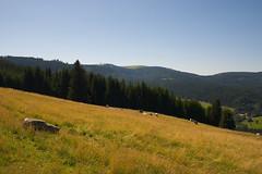 (Pter I. Ppics) Tags: feldberg hegyek nmetorszg