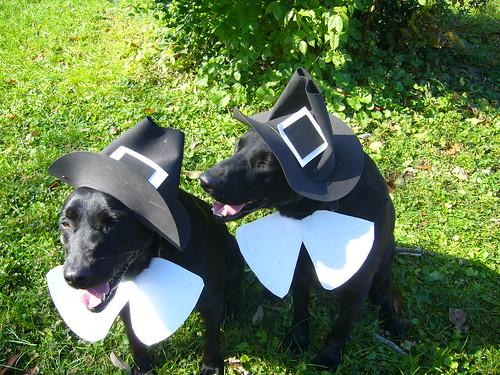 black labs - halloween