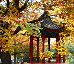Ditan in Autumn (NowJustNic) Tags: china park autumn tree fall leaves catchycolors leaf nikon edited beijing 北京 中国 pavillion 公园 ditanpark d80 nikkor18135mm