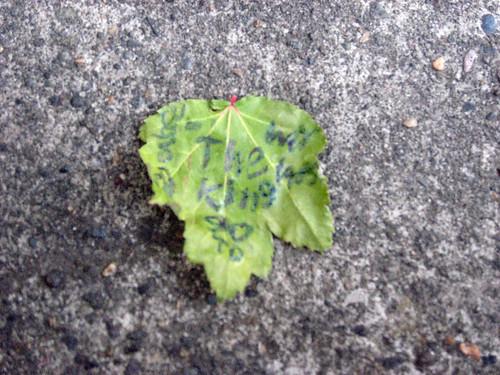 weird leaf.jpg
