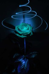 Blue Rose (toucser) Tags: blue rose paintingwithlight slowexposure paintwithlight whirl bluerose