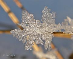 Ledeni kristali (natalija2006) Tags: winter fab ice nature crystal led slovenia zima kristal natalija blueribbonwinner narava passionphotography abigfave anawesomeshot theperfectphotographer npisec