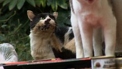 Peace - Pix 04 - thief_cat3