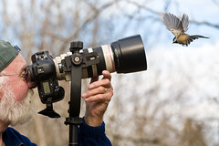 Bird Photography: Explored (Boreal Photography) Tags: birds wildlife boreal birdphotography
