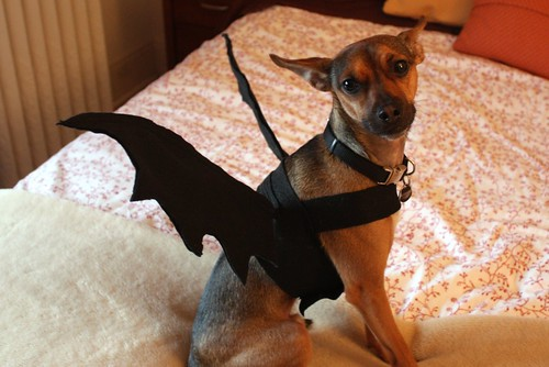 Tutorial dog bat costume life at cloverhill heres a quick step by step tutorial on how to make this dog bat costume yourself solutioingenieria Image collections