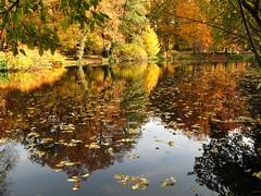Fall, reflected (langkawi) Tags: park autumn reflection berlin fall water colors leaves laub herbst foliage explore langkawi teich blätter spiegelung tiergarten farben naturesfinest