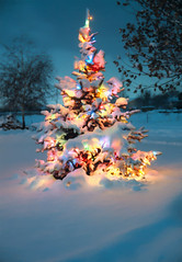 "Snow covered Christmas tree with colorful lights (IronRodArt - Royce Bair (""Star Shooter"")) Tags: christmas new xmas eve blue winter white holiday snow cold tree beautiful pine night season wonder outside happy lights star evening colorful frost december glow peace silent shine bright snowy background magic decoration peaceful sparkle celebration holy ornament evergreen fir colored merry multicolored wonderland celebrate yuletide"