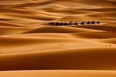 Timeless (Sunil Shinde) Tags: sahara northafrica morocco caravan camels nomads