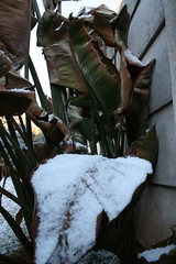 Snow (Debby Champion) Tags: africa winter snow cold ice southafrica wintermorning jhb westrand