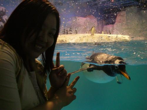 近距離和企鵝拍照