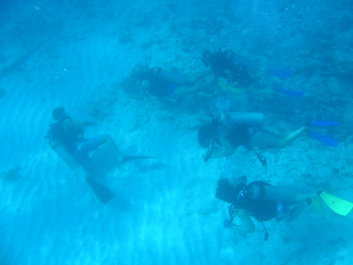 Exploring group on their first dive