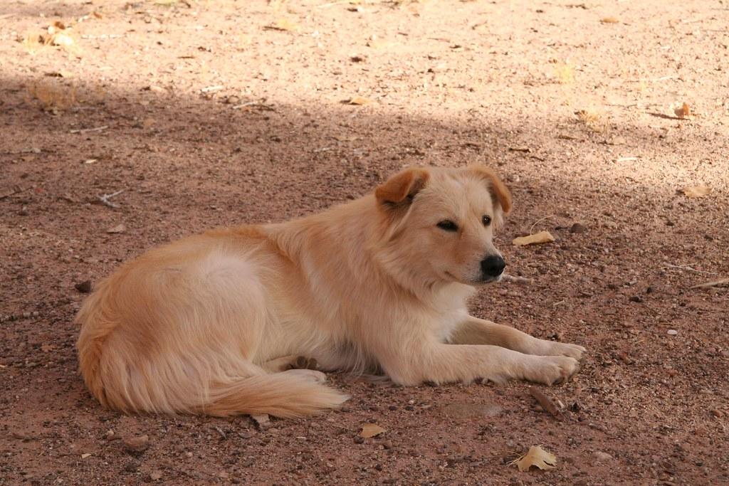 reservation dog