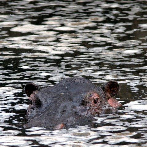 in the swim...