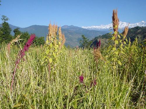 India 2005 Photos (Taken By Naoko Yatani)