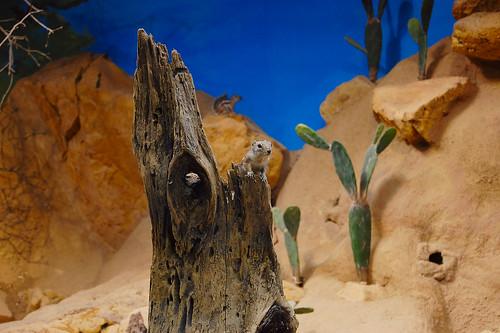 Chipmunk at Skansen Aquarium