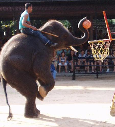THAI ELEPHANT BALLING