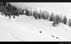 Come Down (LilFr38) Tags: winter mist mountain snow france tree montagne bush path hiver trace neige comedown arbre canonef1740mmf4lusm chemin brume ancelle hautesalpes champsaur canoneos400drebelxti lesvallons lilfr38