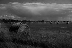 rolls (dmacfoto) Tags: blackandwhite field farm manitoba hay hayrolls portagelaprairie